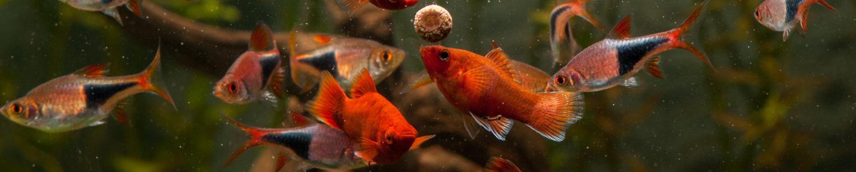 Zoetwater Aquariums